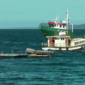 WHAT TO SEE IN Chiloe Island, Chile. From Puerto Montt (PONANT)